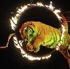 Цирки в Ертарском